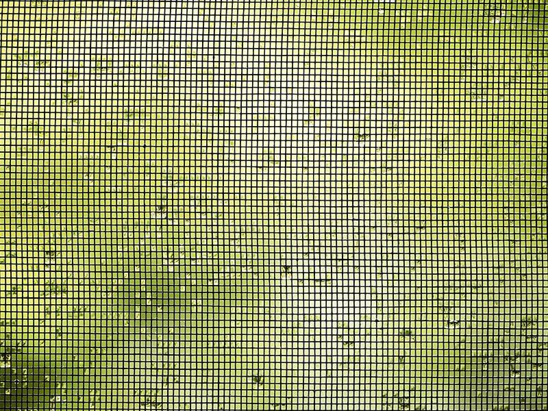 moskitiery